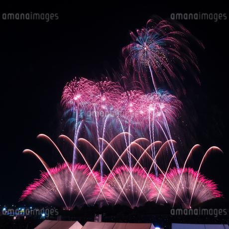 常総きぬ川花火大会 日本 茨城県 常総市の写真素材 [FYI03416467]
