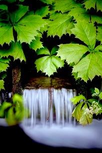 元滝伏流水(もとたきふくりゅうすい) 日本 秋田県 にかほ市の写真素材 [FYI03416546]