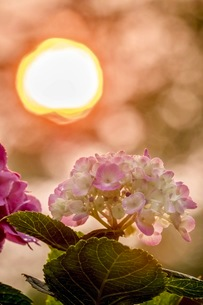 幸手権現堂桜堤 (県営権現堂公園) 日本 埼玉県 幸手市の写真素材 [FYI03416553]