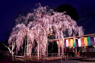 慈眼寺 日本 埼玉県 坂戸市の写真素材 [FYI03416585]