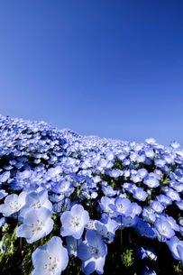 国営ひたち海浜公園 日本 茨城県 ひたちなか市の写真素材 [FYI03416592]