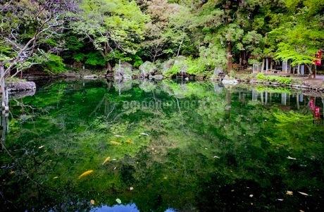 出流原弁天池 日本 栃木県 佐野市の写真素材 [FYI03416675]