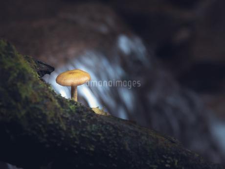 水辺のキノコの写真素材 [FYI03416684]