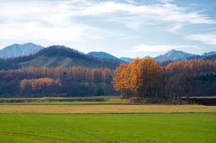 秋の十勝の写真素材 [FYI03417234]