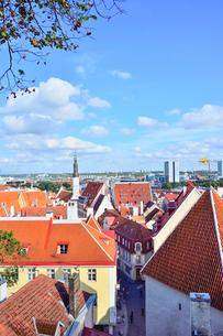 コフトゥ展望台から見た世界遺産エストニア・タリン旧市街の中世的な建物が並ぶ景観と遠くに見える新市街・旧市街は世界遺産の写真素材 [FYI03417542]