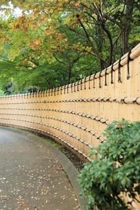 竹の垣根の写真素材 [FYI03417624]