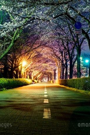 小江戸川越 日本 埼玉県 川越市の写真素材 [FYI03417653]