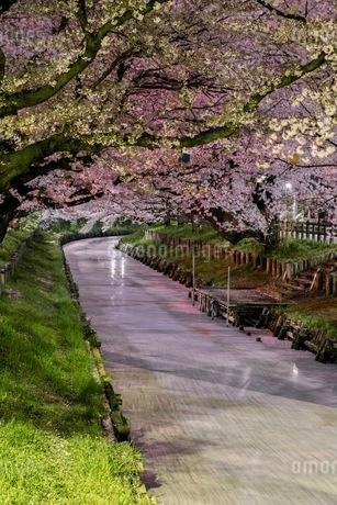 小江戸川越 日本 埼玉県 川越市の写真素材 [FYI03417656]
