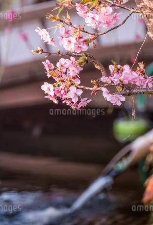 小江戸川越 日本 埼玉県 川越市の写真素材 [FYI03417678]