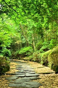 森の中の石畳の道の写真素材 [FYI03417694]