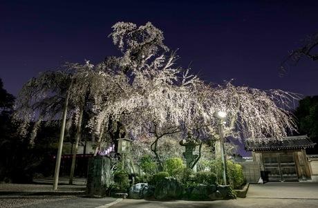 川越喜多院 日本 埼玉県 川越市の写真素材 [FYI03417729]