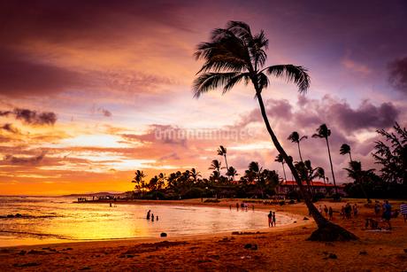 ハワイの夕暮れの写真素材 [FYI03417755]
