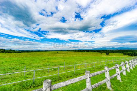 牧場の草原の写真素材 [FYI03417757]