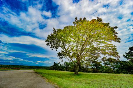 青空と木の写真素材 [FYI03417758]
