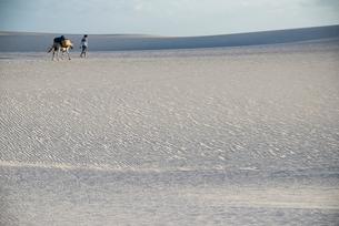 レンソイス砂漠を歩く人ロバ、風紋模様の写真素材 [FYI03417785]