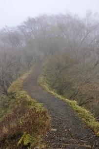 山霧の丹沢山地 大倉尾根の写真素材 [FYI03418184]