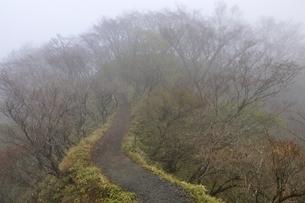 山霧の丹沢山地 大倉尾根の写真素材 [FYI03418185]