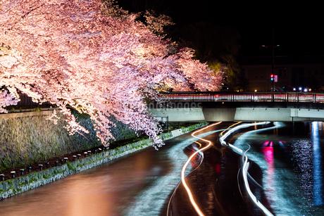 京都の蹴上(琵琶湖疎水)の桜の夜間ライトアップの風景の写真素材 [FYI03418256]