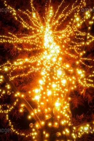 クリスマスのイルミネーション用に装飾された木の写真素材 [FYI03418257]
