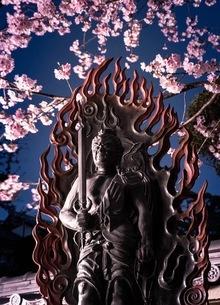密蔵院 日本 埼玉県 川口市の写真素材 [FYI03418282]
