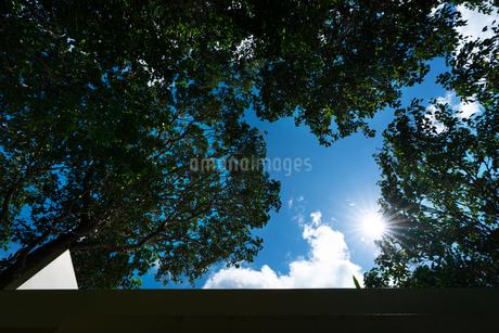 青空と太陽の写真素材 [FYI03418400]