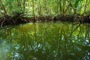 マングローブジャングルの写真素材 [FYI03418403]