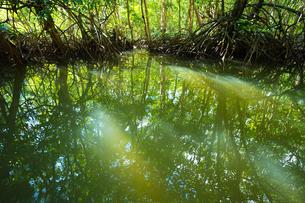 マングローブジャングルの写真素材 [FYI03418404]