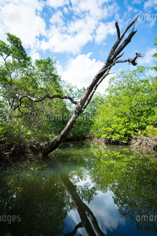 ジャングルの水辺の写真素材 [FYI03418405]