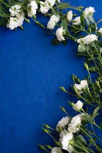 青いリネンの上に置かれた白いバラの花の写真素材 [FYI03418441]