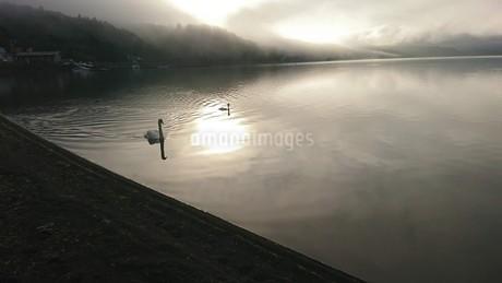 白鳥の湖の写真素材 [FYI03418519]