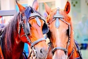 馬の写真素材 [FYI03418730]