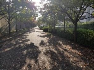 道の写真素材 [FYI03418757]