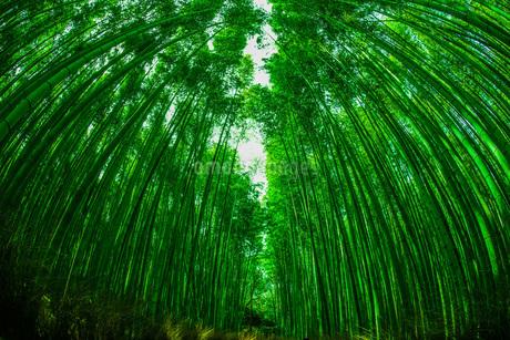 京都・嵐山の竹林の写真素材 [FYI03418823]