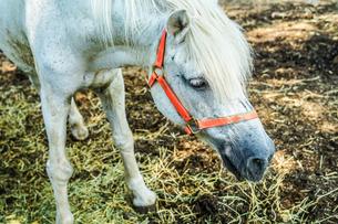牧場の馬のイメージの写真素材 [FYI03418886]