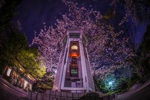 満開の夜桜と横浜元町の電話ボックスの写真素材 [FYI03418964]
