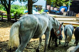 白馬のイメージの写真素材 [FYI03418974]