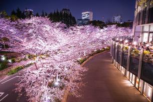 東京ミッドタウンの桜(満開)の写真素材 [FYI03418985]