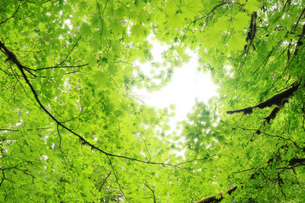 葉の間から見える空、光の写真素材 [FYI03419053]