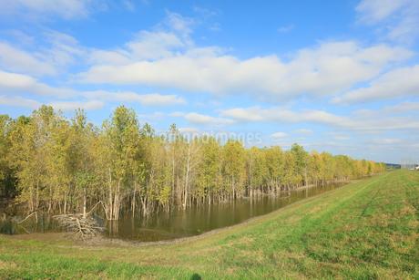 水の中の木と青い空と白い雲の写真素材 [FYI03419060]