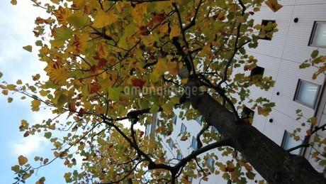 色づく木の写真素材 [FYI03419070]
