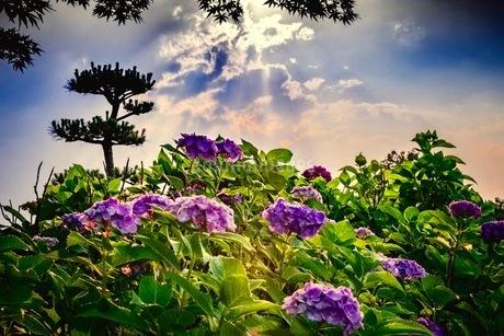 平成の森公園 日本 埼玉県 川島町の写真素材 [FYI03419100]