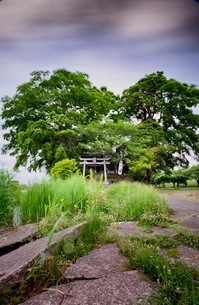 鳥羽井沼自然公園 日本 埼玉県 川島町の写真素材 [FYI03419107]