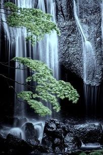 達沢不動滝 日本 福島県 猪苗代町の写真素材 [FYI03419112]