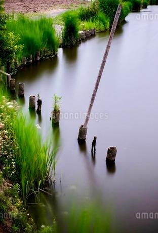 鳥羽井沼自然公園 日本 埼玉県 川島町の写真素材 [FYI03419118]