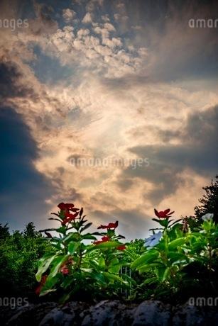 智光山公園 日本 埼玉県 狭山市の写真素材 [FYI03419125]
