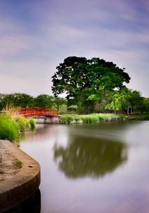 鳥羽井沼自然公園 日本 埼玉県 川島町の写真素材 [FYI03419133]