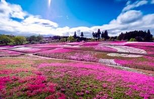 羊山公園 日本 埼玉県 秩父市の写真素材 [FYI03419141]