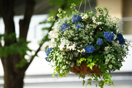 街の通りに飾られた花の写真素材 [FYI03419731]