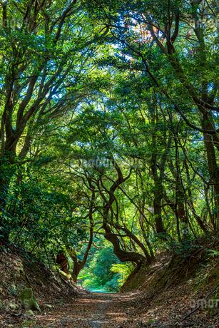 緑のトンネルの写真素材 [FYI03419779]
