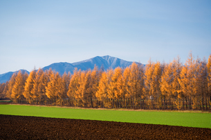 秋の十勝の写真素材 [FYI03419783]